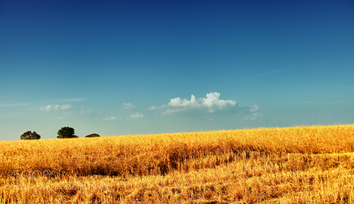 Photograph And the harvest begins ... by Mauro Woiski on 500px
