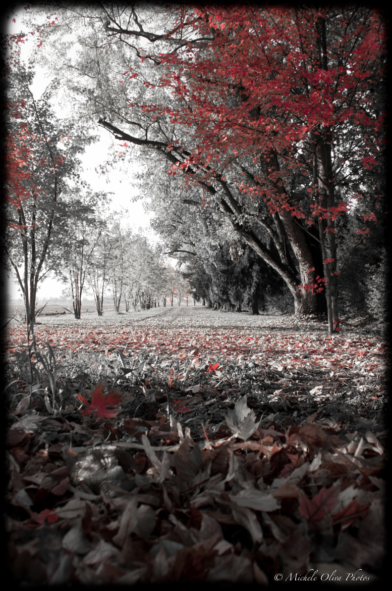 Photograph Autumn by Michele Oliva on 500px