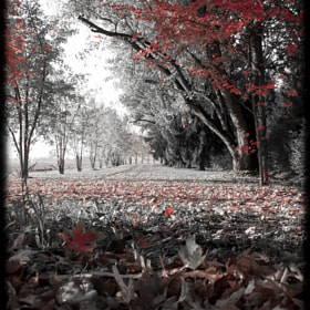Autumn by Michele Oliva (MicheleOlivaPhotos)) on 500px.com