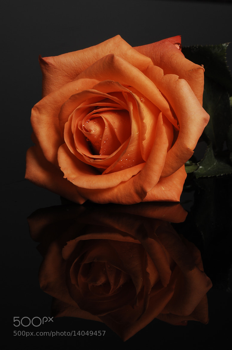 Photograph Rose in orange Color by Cristobal Garciaferro Rubio on 500px