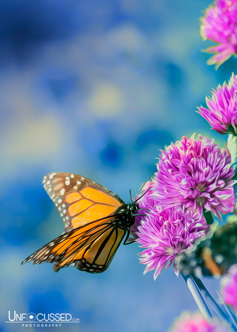 Photograph Monarch Blues on Chives by Bill Tiepelman on 500px