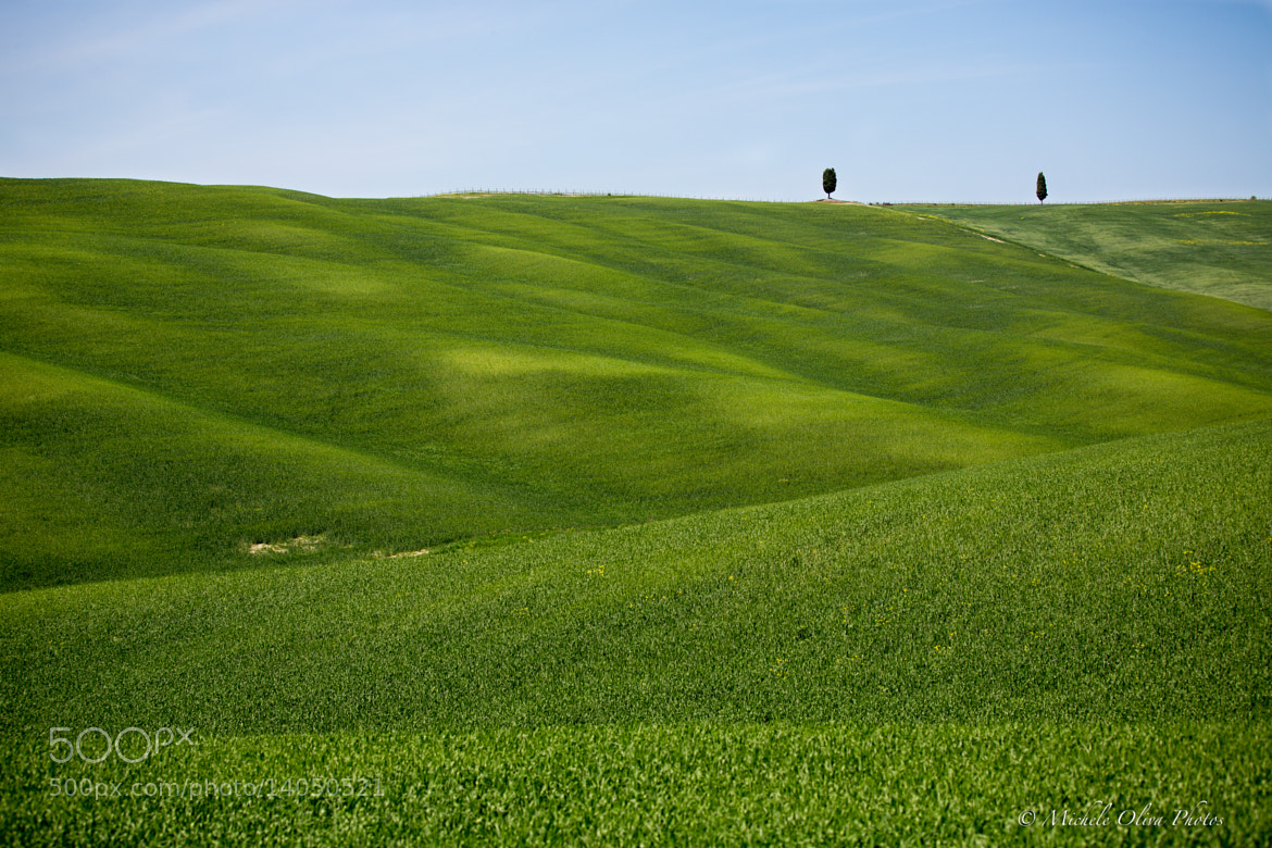 Photograph Green by Michele Oliva on 500px