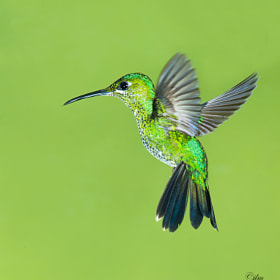 Suspended In Mid Air !! by Judylynn Malloch (judylynn)) on 500px.com