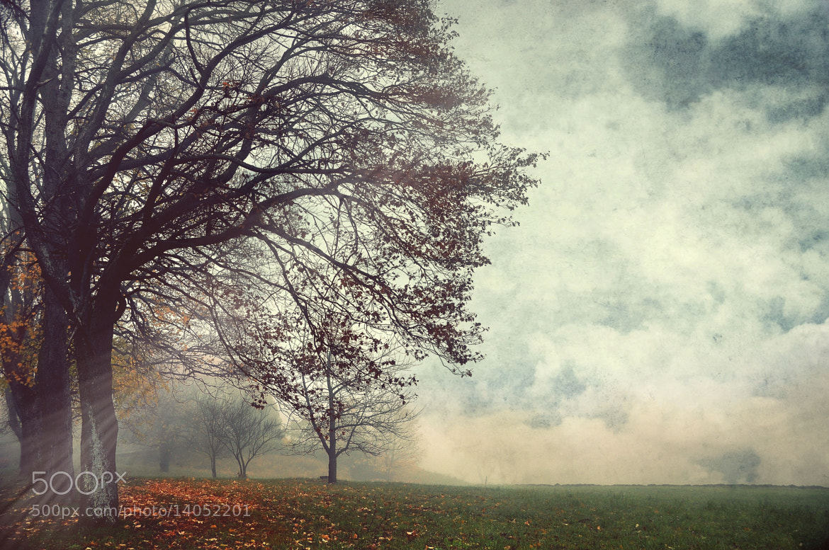 Photograph misty moments ... by Irene Weiss on 500px