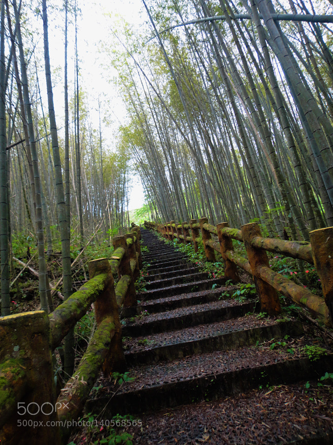 The Bamboo Road