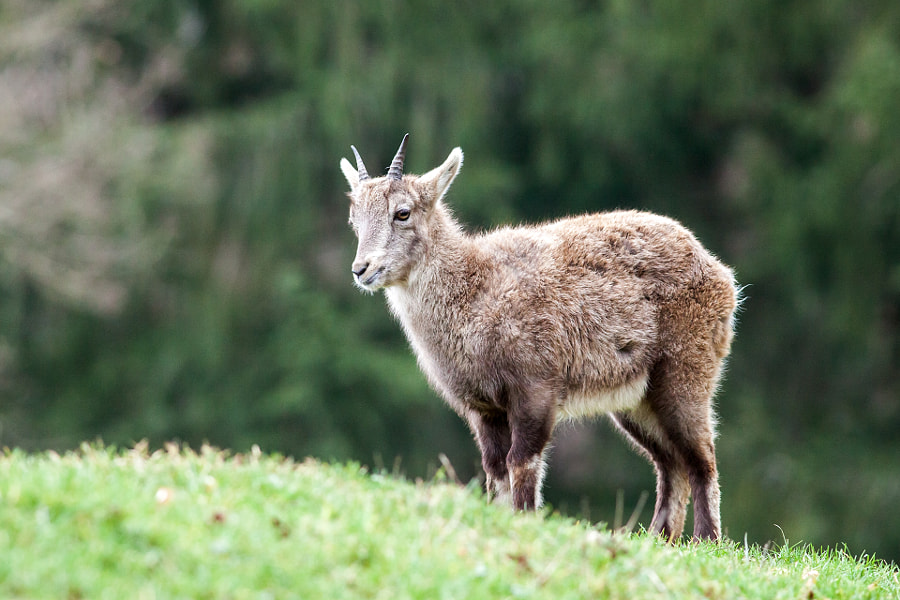 Young Capricorn