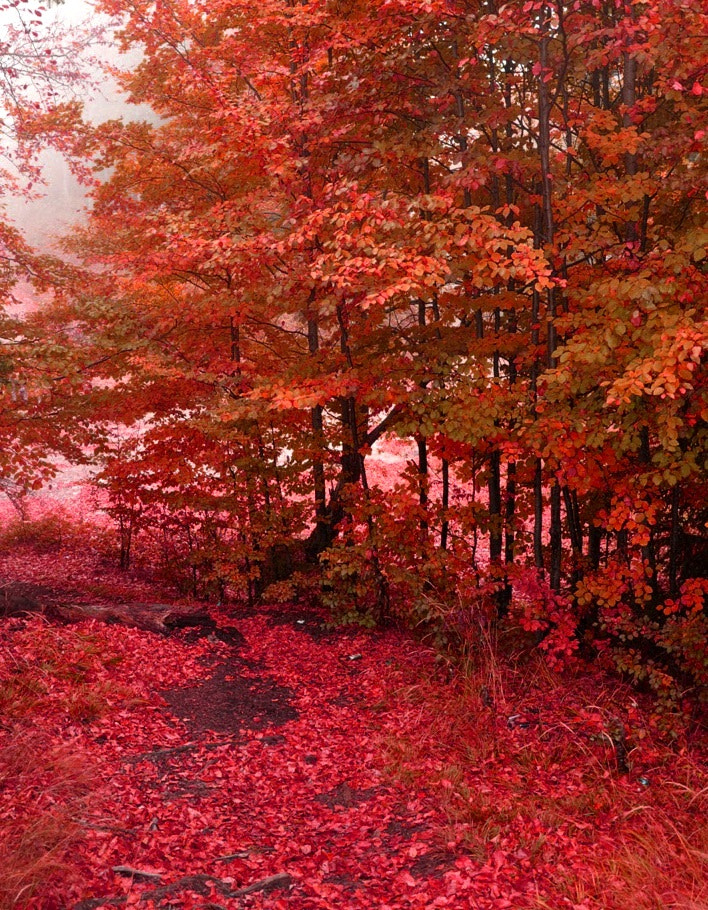 Photograph Red autumn by Mihaela Floriana Soare on 500px