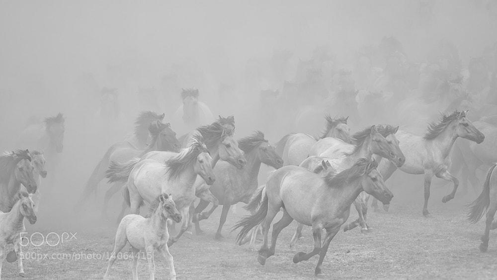 Photograph Wildhorses  by Stefanie Lategahn on 500px