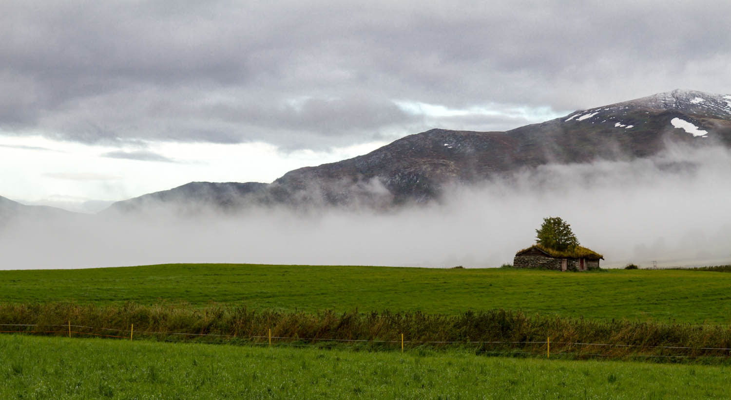 Photograph Fog and tree by Jens-Chr. Strandos on 500px