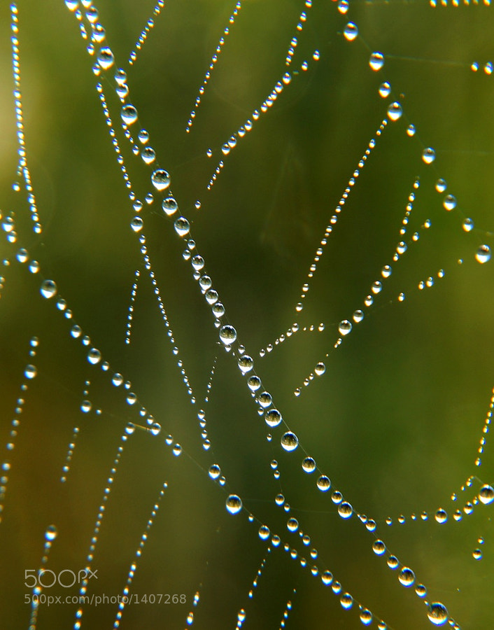 Macro of dew drops on a spiderweb