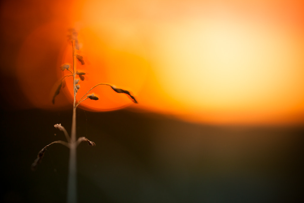 Photograph Macro Sunrise by Pierre Pocs on 500px