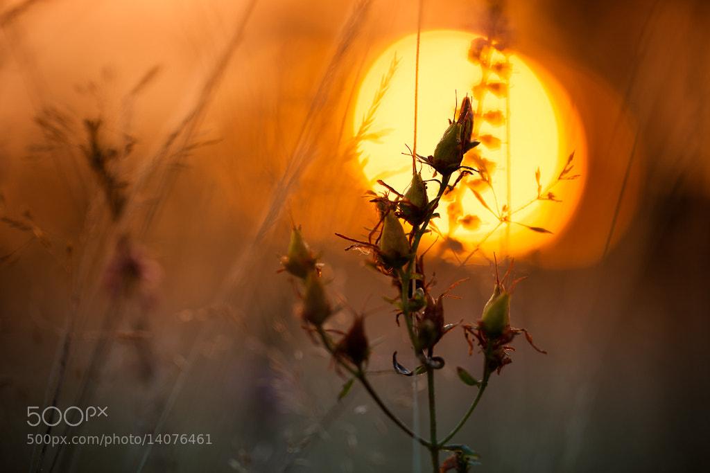 Photograph Macro Sunrise by Pierre Pocs on 500px