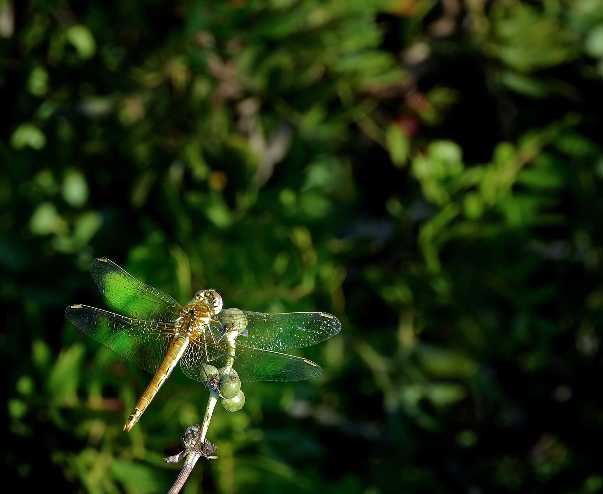 Photograph Dragonfly 2 by John Barker on 500px