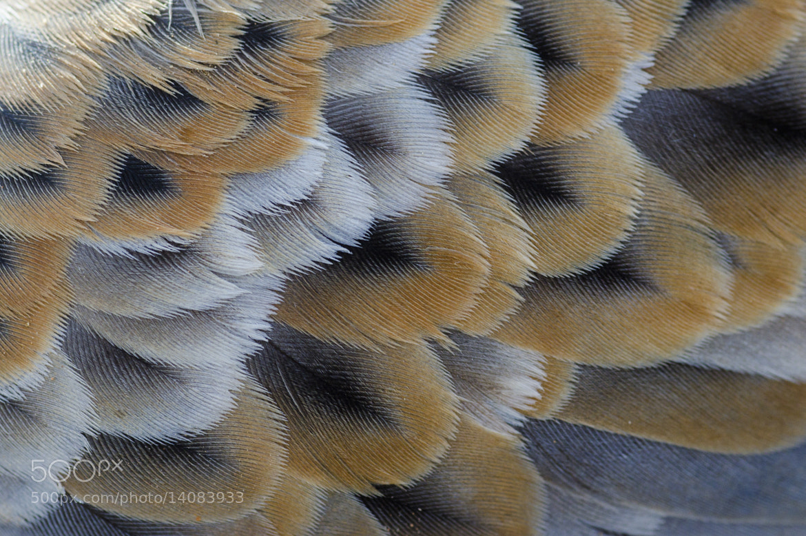 Photograph Dove feathers by Saud Alrshiad on 500px