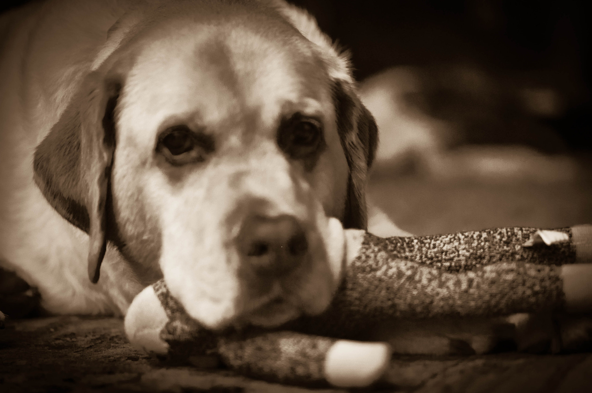 Photograph My Dog by Jenna Griffith on 500px