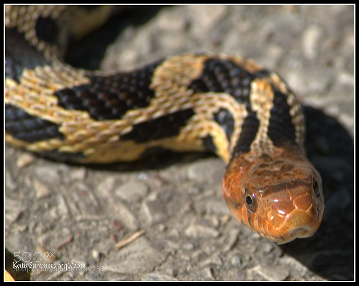 Photograph snake by Keith Summers on 500px