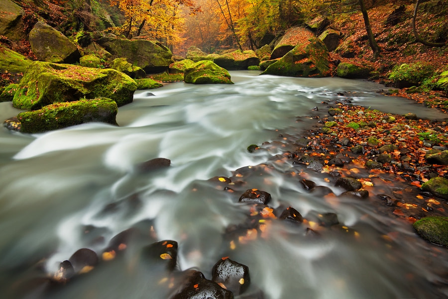 Photograph River in autumn colors by Daniel Řeřicha on 500px