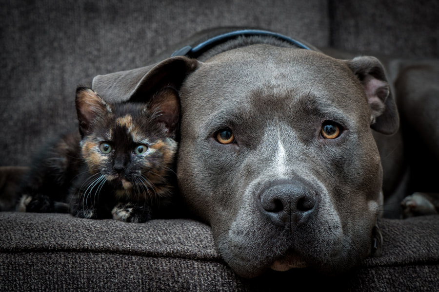 Best friend love, автор — Casey Bebernes на 500px.com
