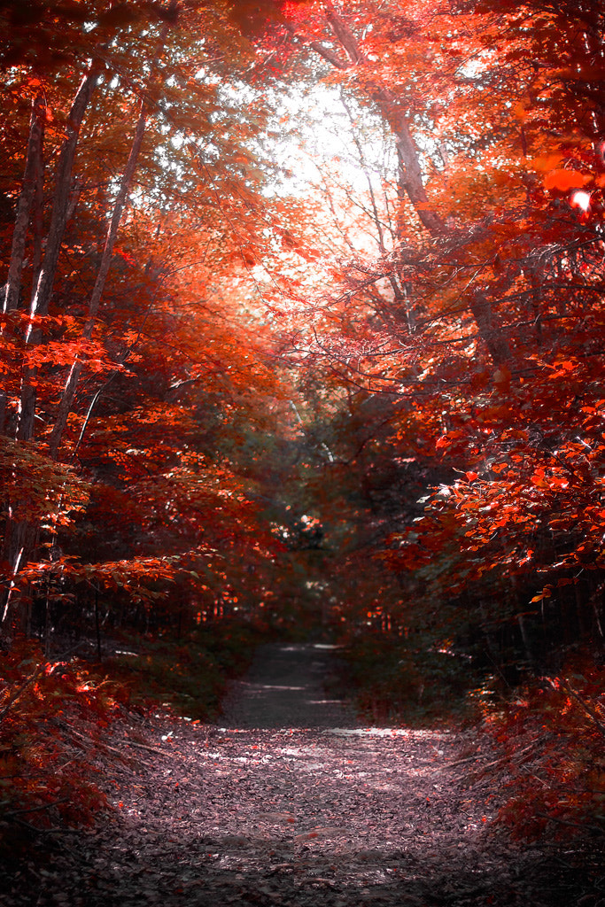 Photograph Take the Red Path by Robert Mirabelle on 500px