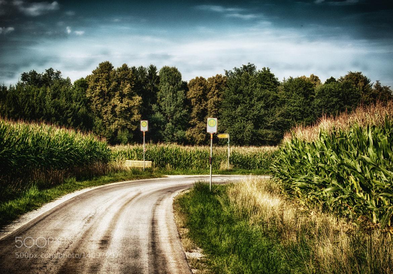 Photograph Corn Corn Corn by Georg Tueller on 500px