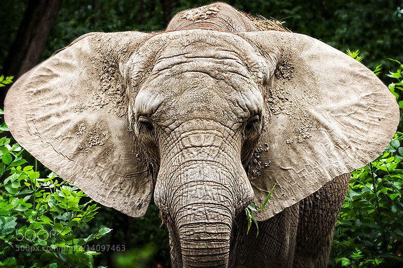 Photograph Ear by László Oláh on 500px