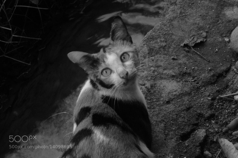 Photograph the eyes by Welhelmus Dengi on 500px