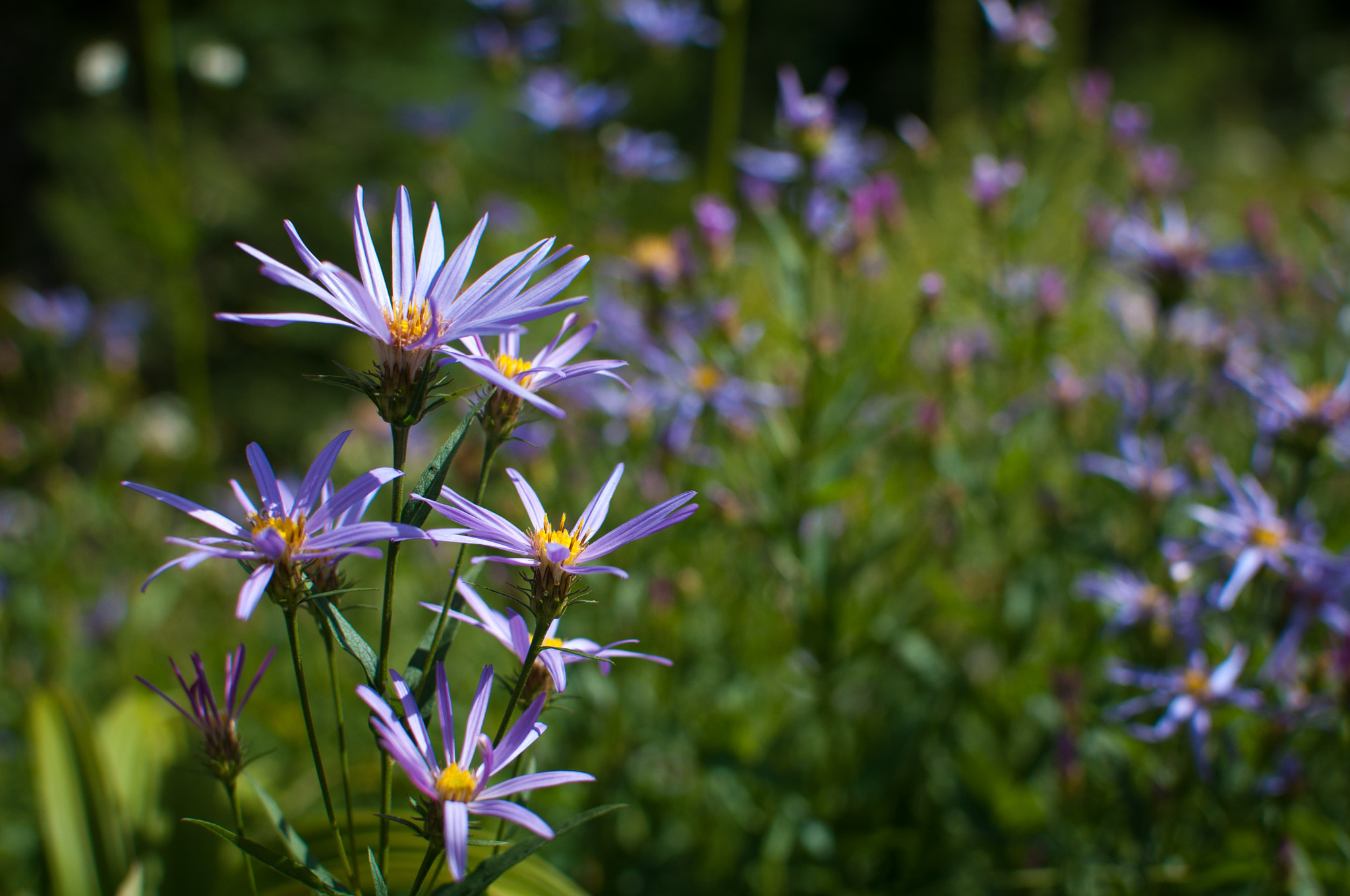 Photograph Paradise Wildflowers by Jeff Carlson on 500px