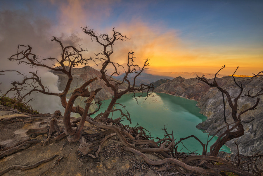 Dancing Trees of Kawah Ijen by Kristianus Setyawan on 500px.com