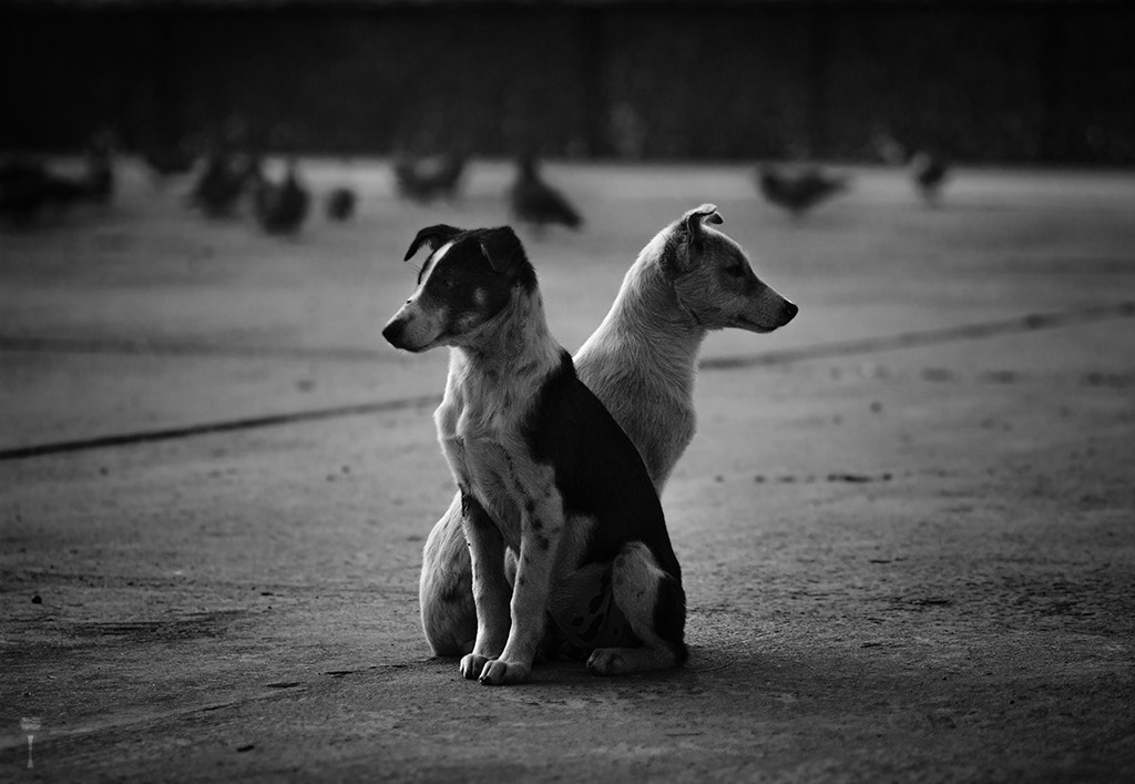 Photograph Brothers in Arms - Indian Dogs by Romain Matteï on 500px