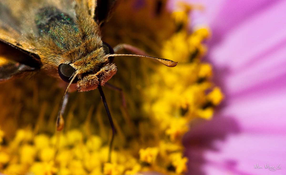 Photograph Bee 6 by Min Ming Lo on 500px
