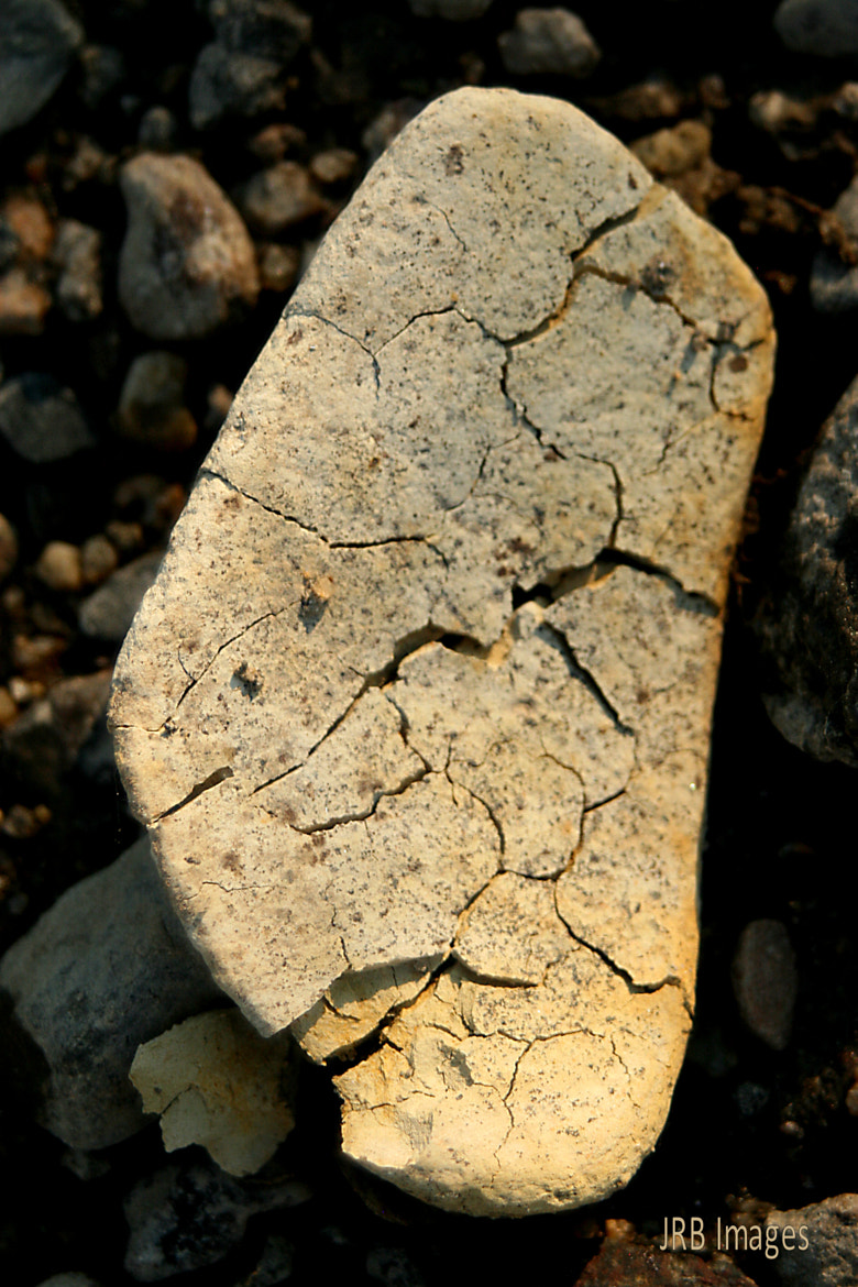 Photograph Nature slowly reclaiming Her rock by Jessi Brendel on 500px