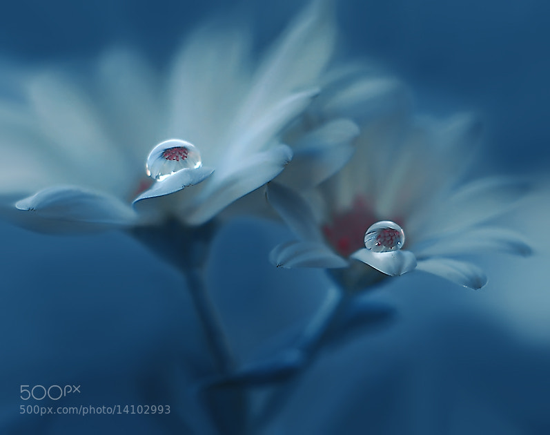 Photograph Inexpressible... by Juliana Nan on 500px