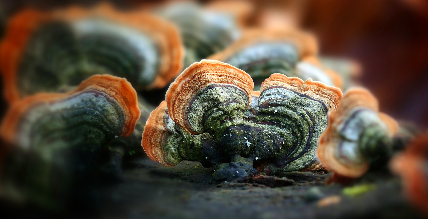 Photograph Trametes versicolor by Justino  Diez on 500px