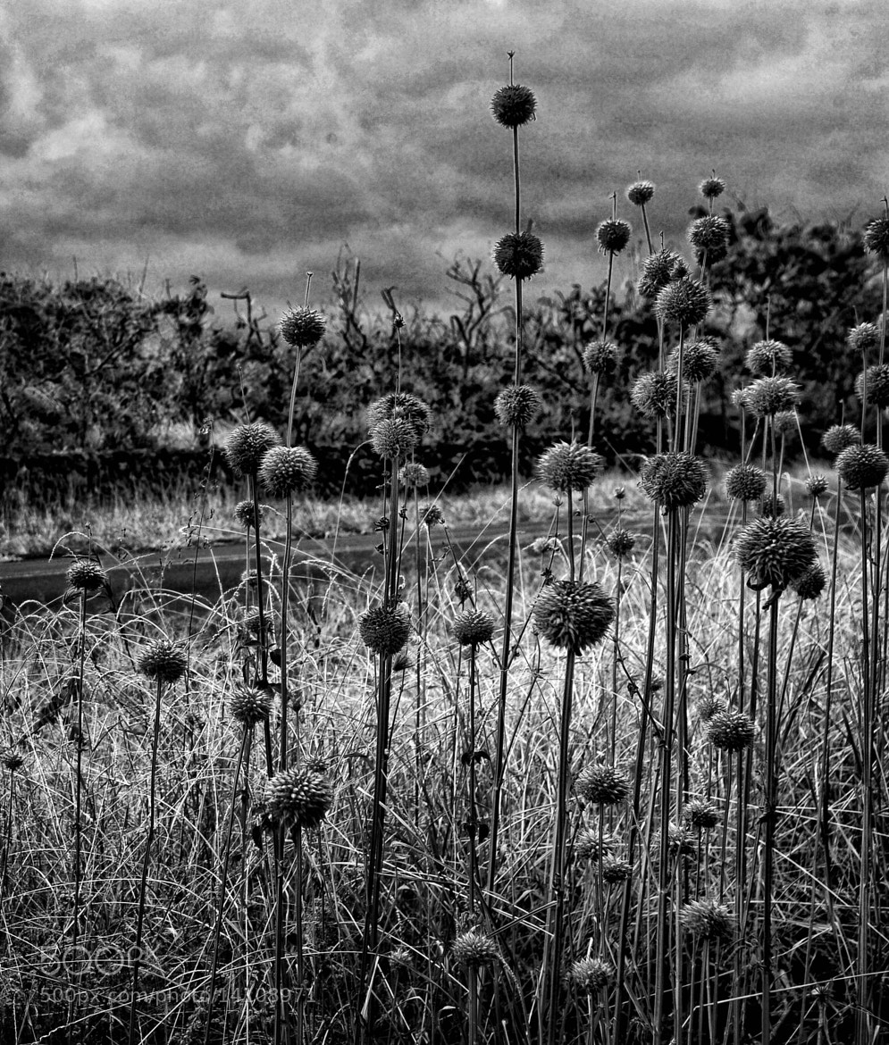 Photograph Grass by Mark Lawrence on 500px