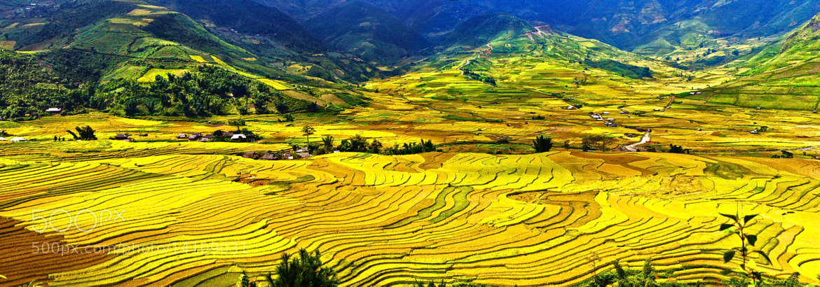 Photograph Rice field in the Tú Lệ valley by Amateur Pic on 500px