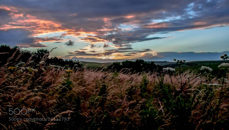 Photograph Meadow Dusk by julian john on 500px
