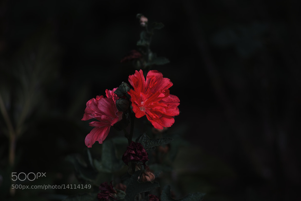 Photograph Red flower by marbee .info on 500px