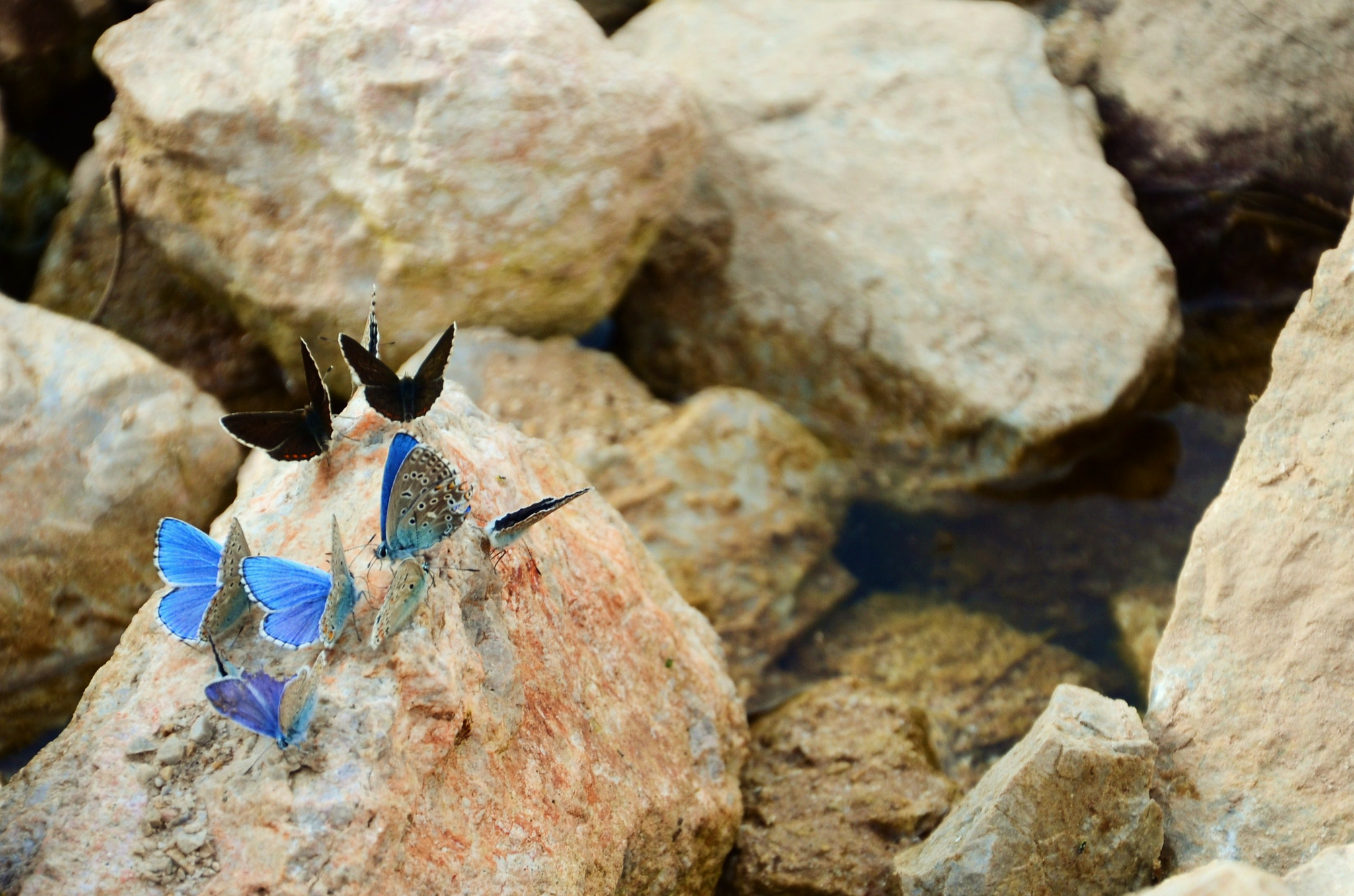 Photograph Blue Butters by Abdullrahman Gasim on 500px