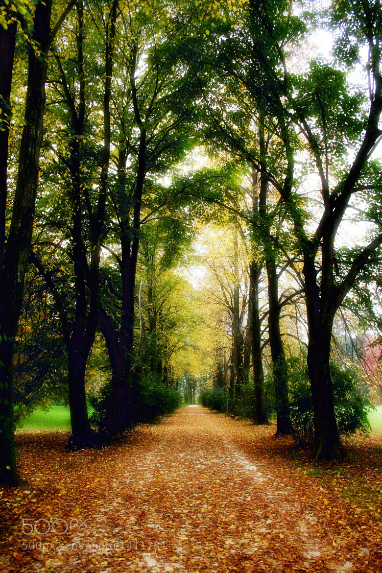 Photograph Autumn Boulevard by Roberto Picco on 500px