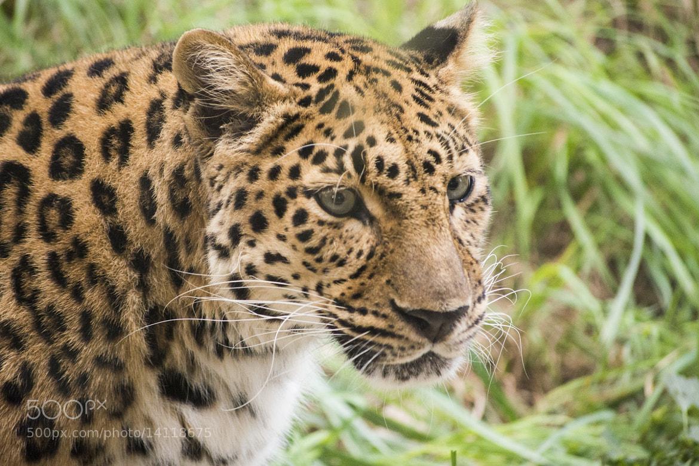 Photograph Wild and innocent by Taniya Varshney on 500px