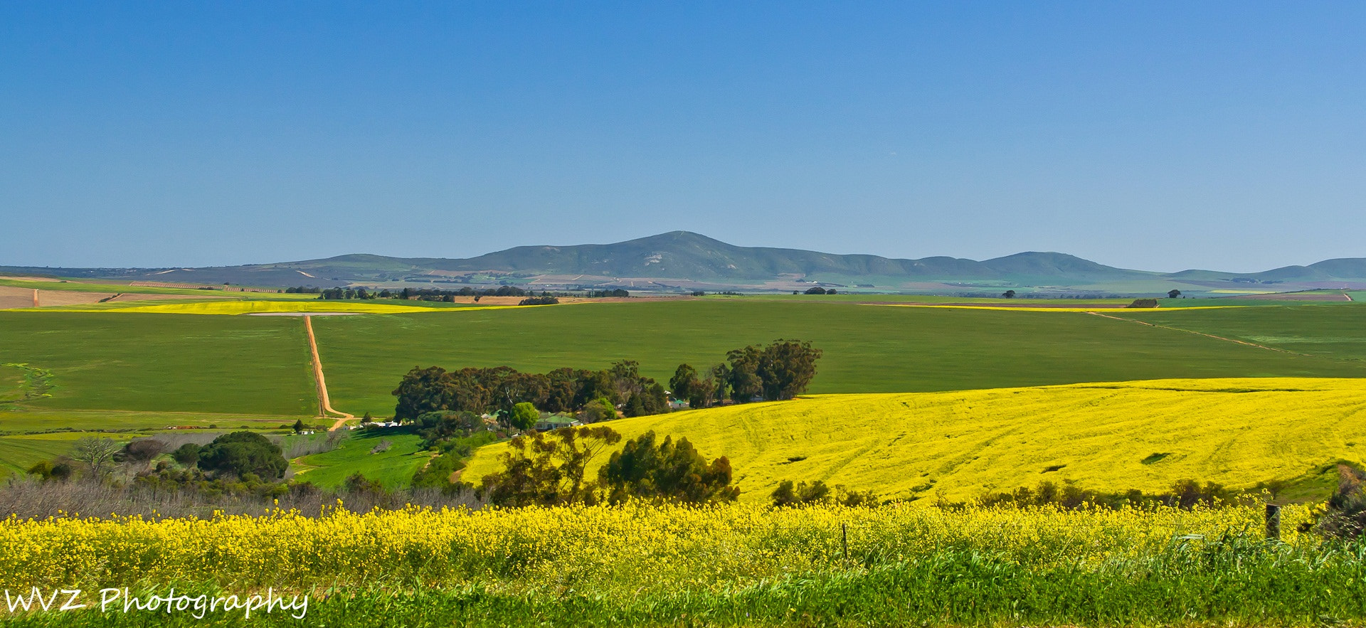 Photograph Canola field by Wendy Van Zyl on 500px