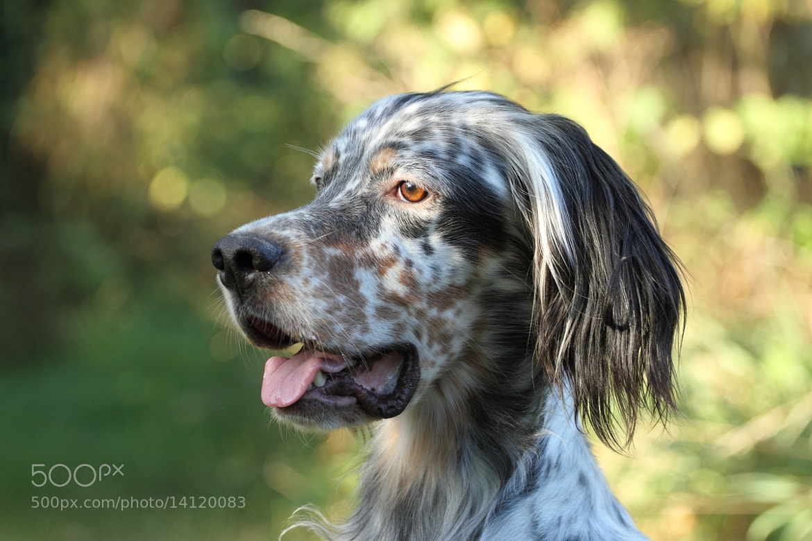 Photograph My dog by Sébastien G on 500px