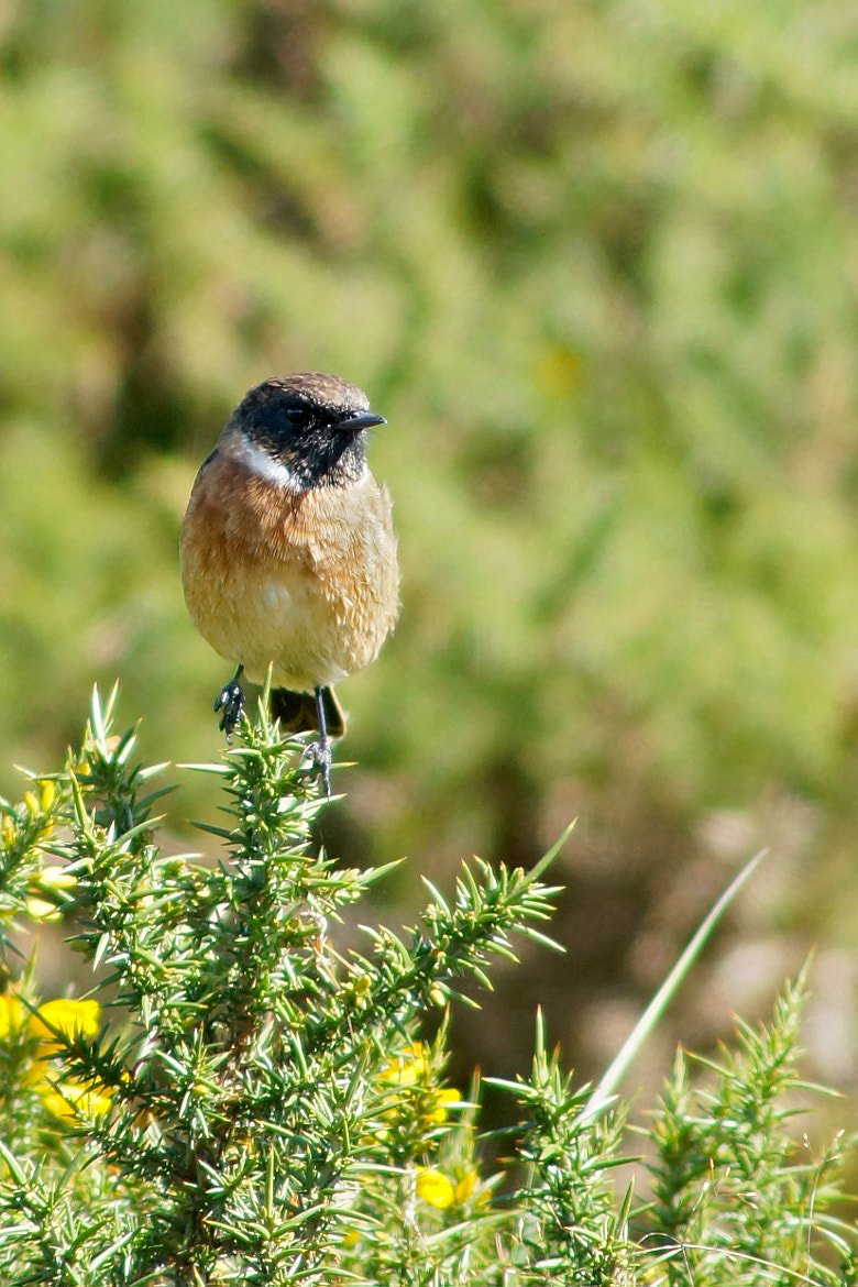 Photograph Stone chat by Darren Welsh on 500px