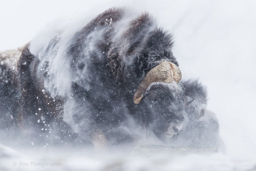 Ice age giant by Roy Mangersnes on 500px.com