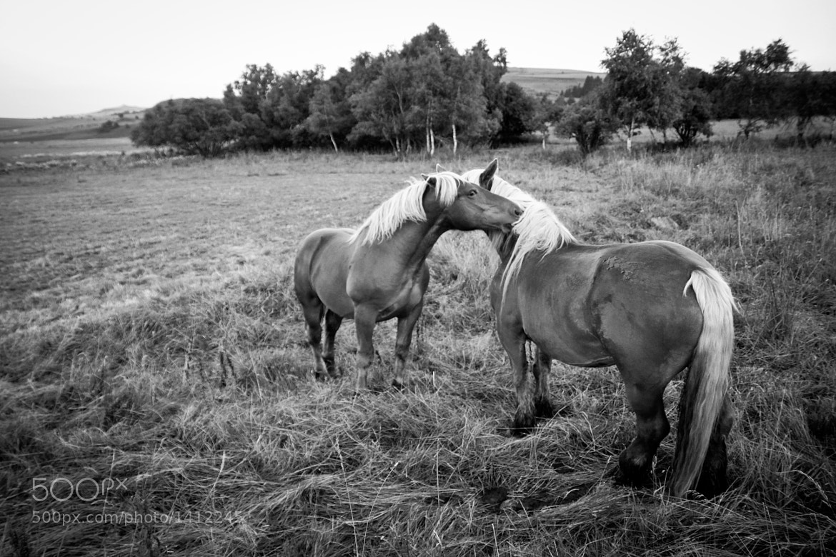 Photograph Equine Affection 2 by Kelsey Freeman on 500px