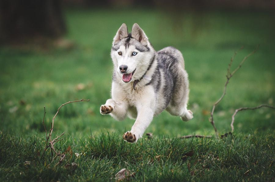Flying dog, автор — Filip Micovic на 500px.com