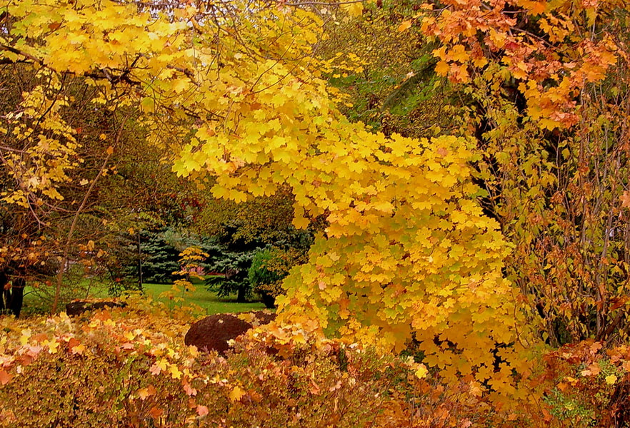 Photograph autum leaves by tugba kiper on 500px