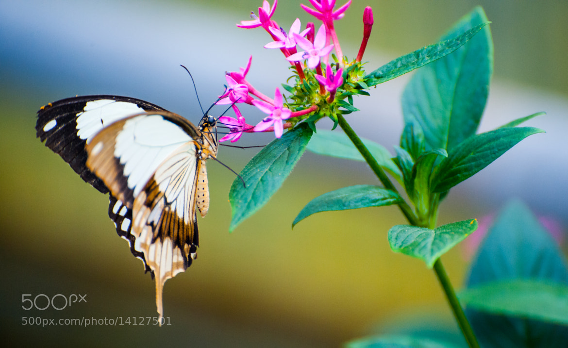 Photograph Butterfly by Robert Hahn on 500px