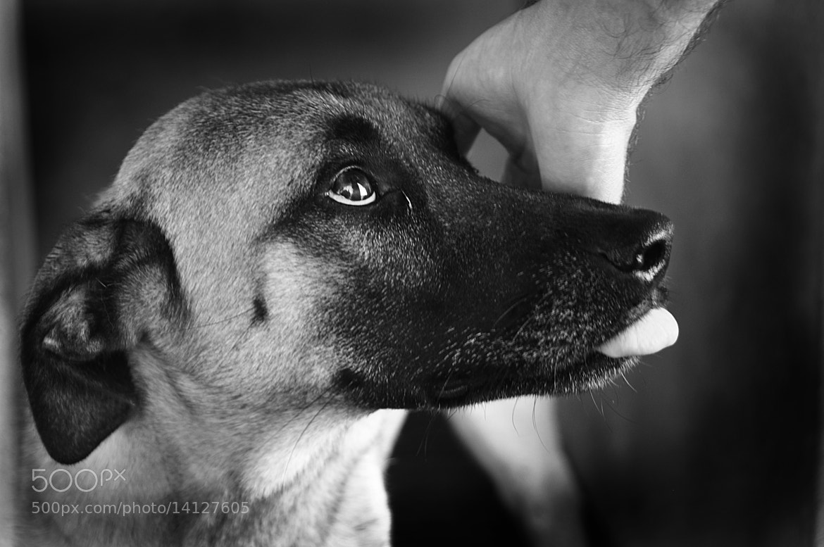 Photograph best pals by Rúben Almeida on 500px