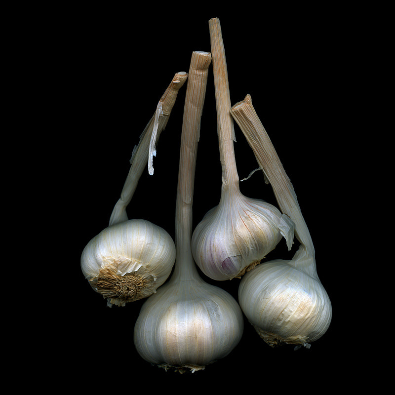 Photograph  BEWARE... THE GARLIC IS LOOSE... by Magda Indigo on 500px